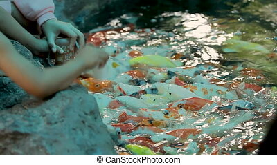 Children feed carp Koi fishes (Cyprinus carpio) from a baby bottles with a special liquid fish food. Dusit Zoo, Bangkok, Thailand.