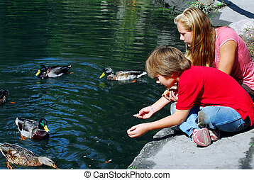 Children feeding ducks at the pond in a park