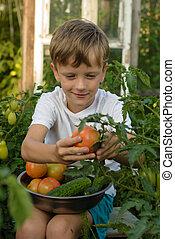 Children gather vegetables harvest. The boy works in the garden.