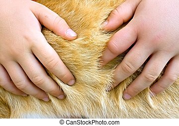 childrens hands in the red ginger aimal fur