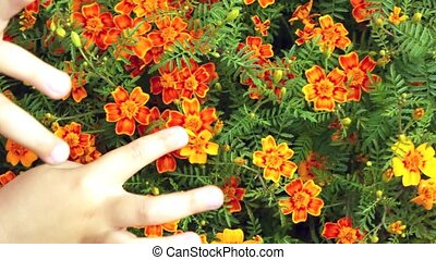 children hands touch fingers of head of flowers