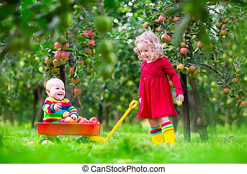 Children picking apples in fruit garden