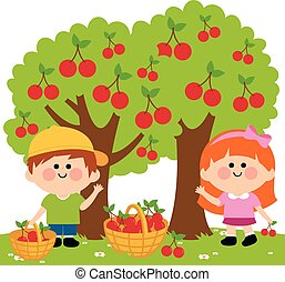Vector Illustration of two children, a boy and a girl picking cherries under the cherry trees.