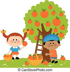 Children picking oranges - Two children, a boy and a girl...