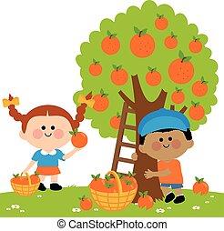 Children picking oranges under the citrus tree. Vector illustration