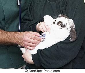 Children Taking Sick Rabbit To Vet