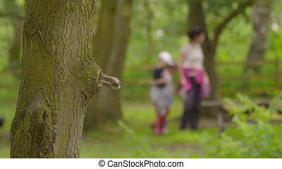 Children wandering around a park - A still medium shot of a ...