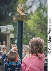 Children watching birds of prey show - Boy and girl looking ...