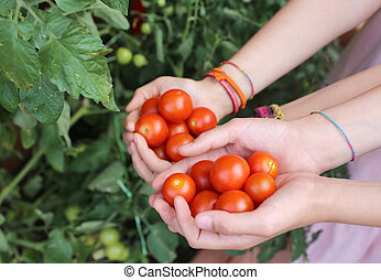 children with hands full of tomatoes on the garden on the terrac