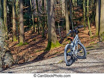 Children's bicycle at the edge of forest
