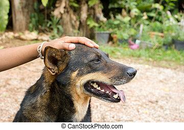 Children's hand holding on dog head.