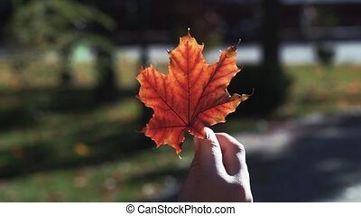 Children's hand holds the autumn leaf.