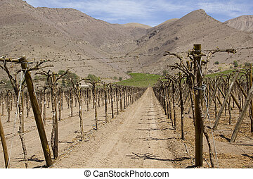 Chile - fertile valley in inhospitable mountains