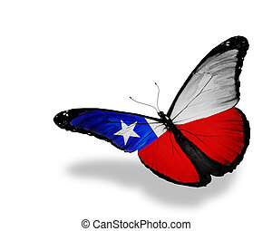 Chilean flag butterfly flying, isolated on white background