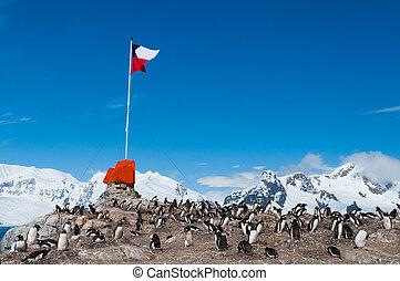 chileno, base, bandera de antarctica, vuelo
