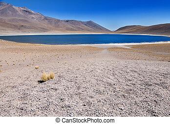 chileno, sobre, (lake), encima, 4000m, level., miscanti, mar, desierto, laguna