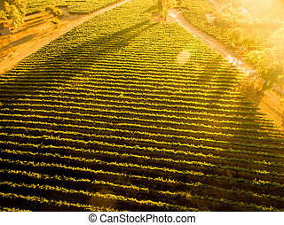 chilensk, antenne, landskab., hen, vineyard., solnedgang, udsigter