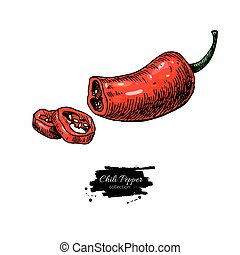 Chili Pepper hand drawn vector illustration. Vegetable artistic style object. Half Isolated hot spicy