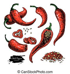 Chili Pepper hand drawn vector illustration. Vegetable artistic style object. Isolated hot spicy mexican pepper