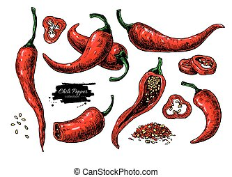 Chili Pepper hand drawn vector illustration. Vegetable artistic style object. Isolated hot spicy