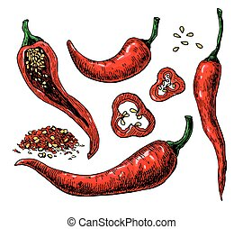 Chili Pepper hand drawn vector illustration. Vegetable engraved style object. Isolated hot spicy mexican