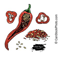 Chili Pepper hand drawn vector illustration. Vegetable engraved style object. Isolated hot spicy