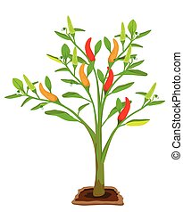 chili plant on white background vector design