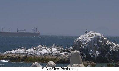 chilien, séance, port, valparaiso, rocher, pelican(s)