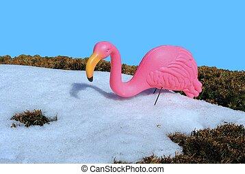 chilled flamingo