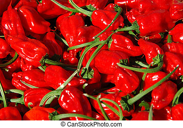 Chilli red peppers