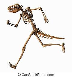 chimeric, scheletro