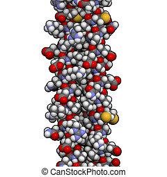 chimico, structure., intermedio, filamenti, keratin