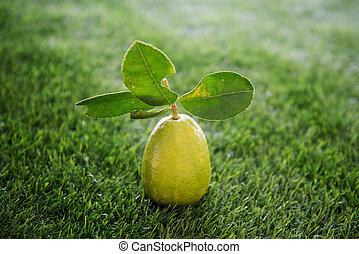 chimique, pelouse, citron, gratuite