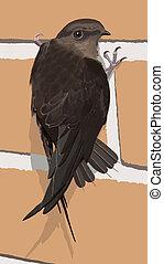 Chimney Swift (Chaetura pelagica) on brick chimney wall
