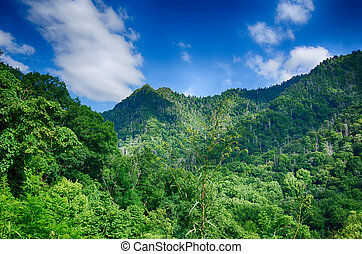 chimney tops mountain in great smoky mountains