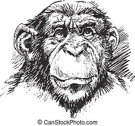 chimp monkey head