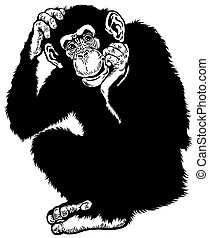 chimpanzee black white - chimpanzee monkey sitting pose,...