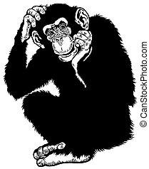 chimpanzee monkey sitting pose, black and white image