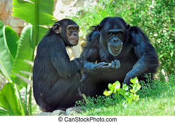 Jerusalem Biblical Zoo - Chimpanzee in Jerusalem Biblical ...