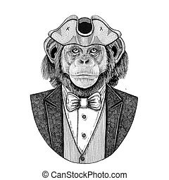 Chimpanzee, Monkey, ape Animal wearing cocked hat, tricorn...