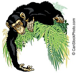 chimpanzee or chimp ape, illustration isolated on white