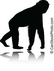 Chimpanzee silhouette