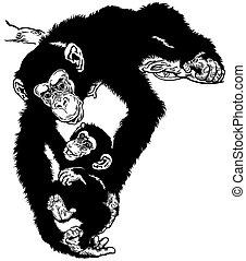 chimpanzee with baby black white
