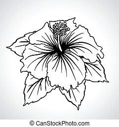 chinês, isolated., macro, pretas, rosa, flores