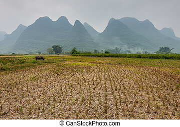 China agricultural fields cloudy
