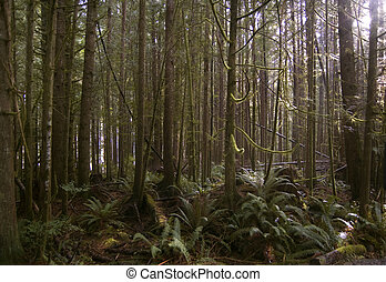 China Beach forest