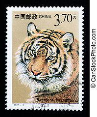 CHINA - CIRCA 2000: A stamp printed in China shows Panthera...