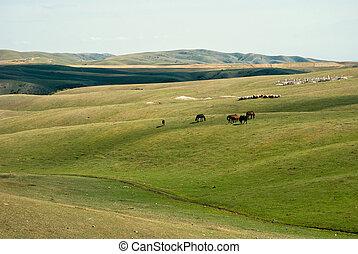 China Xinjiang Tianshan, pasture