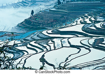 China Yunnan, Yuanyang terraced color