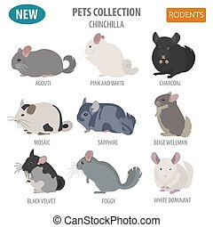 Chinchilla breeds icon set flat style isolated on white. Pet...